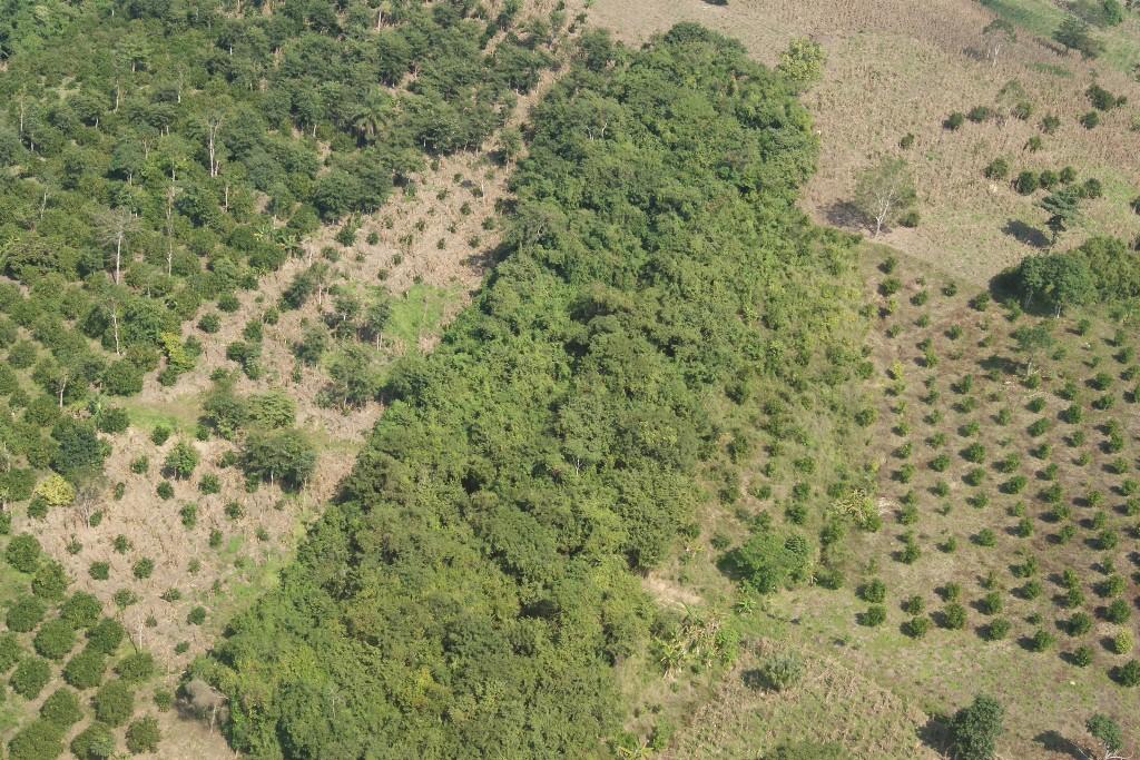 Crecen más de 200% sembradíos de cítricos en la Sierra Norte